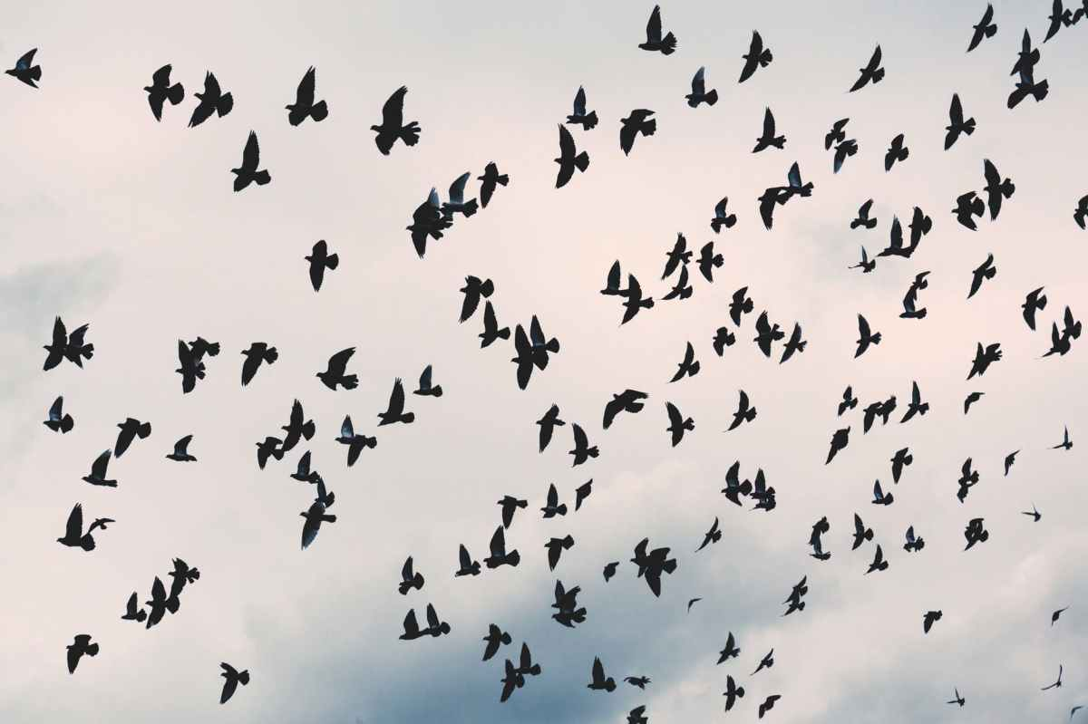 animal avian beak birds