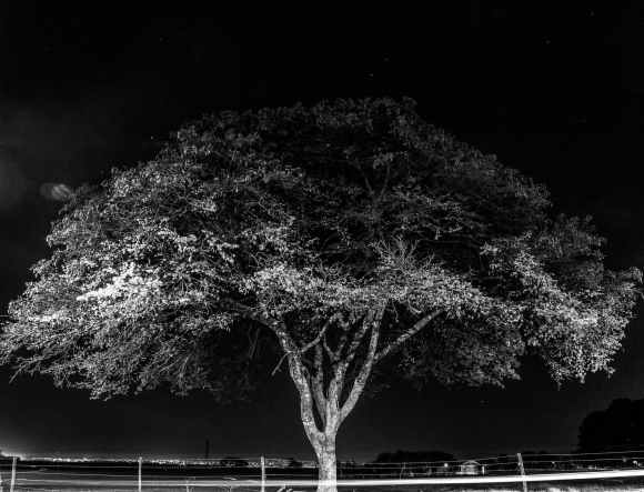 monchrome photo of tree